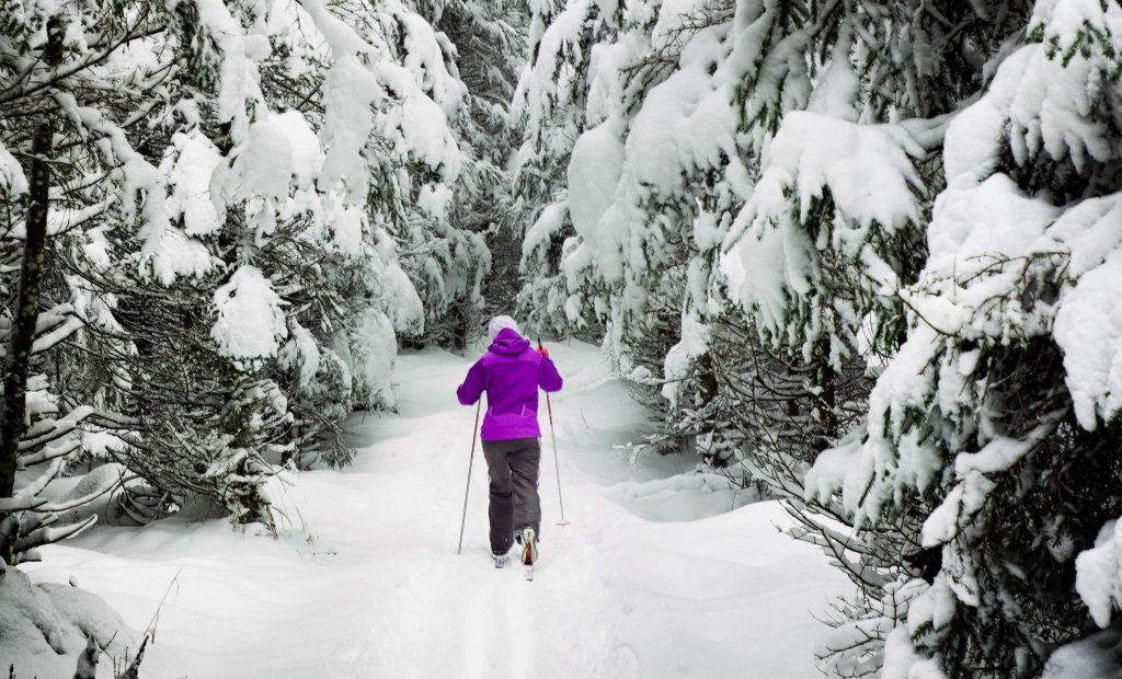 Henkilö hiihtämässä lumisessa metsässä.