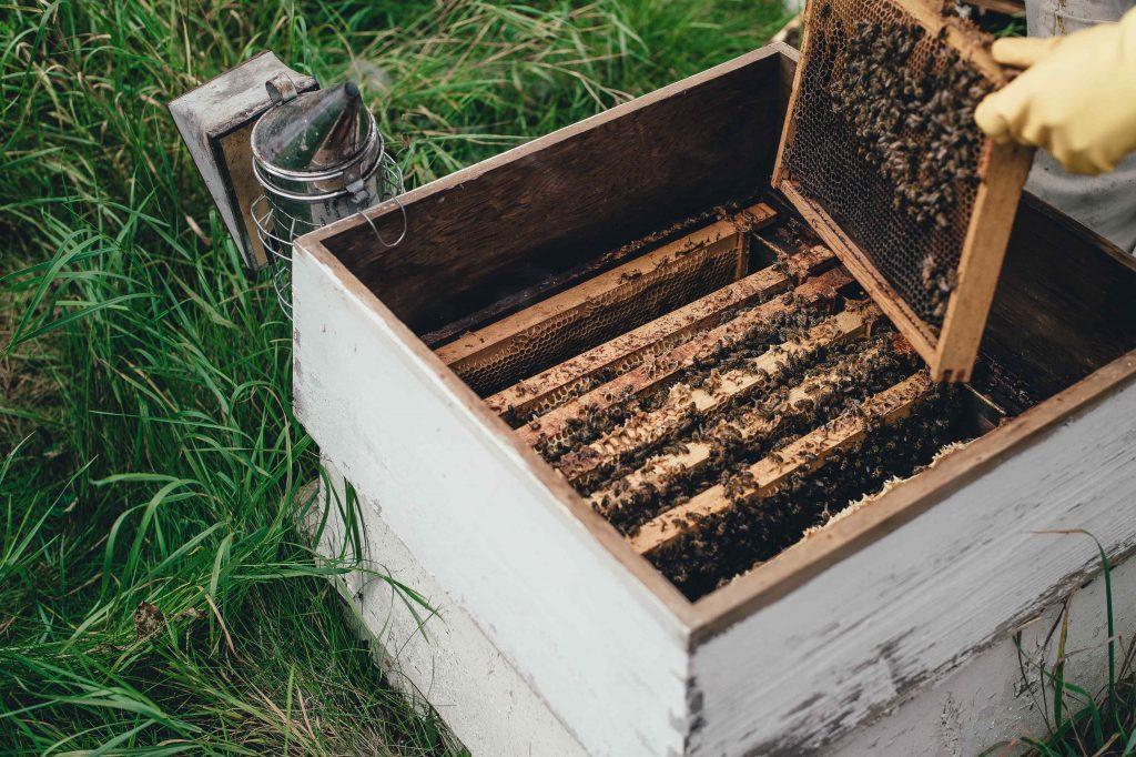 Mehiläisen pesälaatikko ruohikossa
