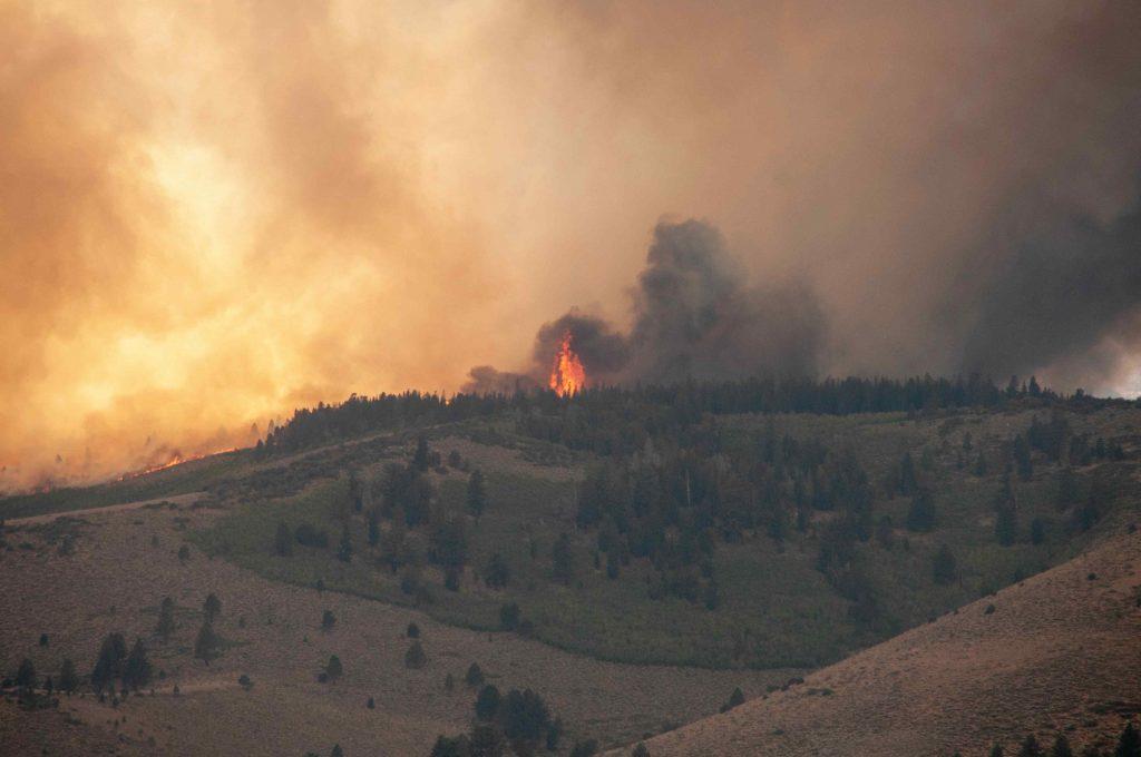 Metsäpalo, taustalla paljon savua