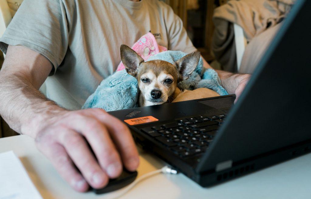 Henkilö tietokoneen ääressä pitää sylissään pientä koiraa