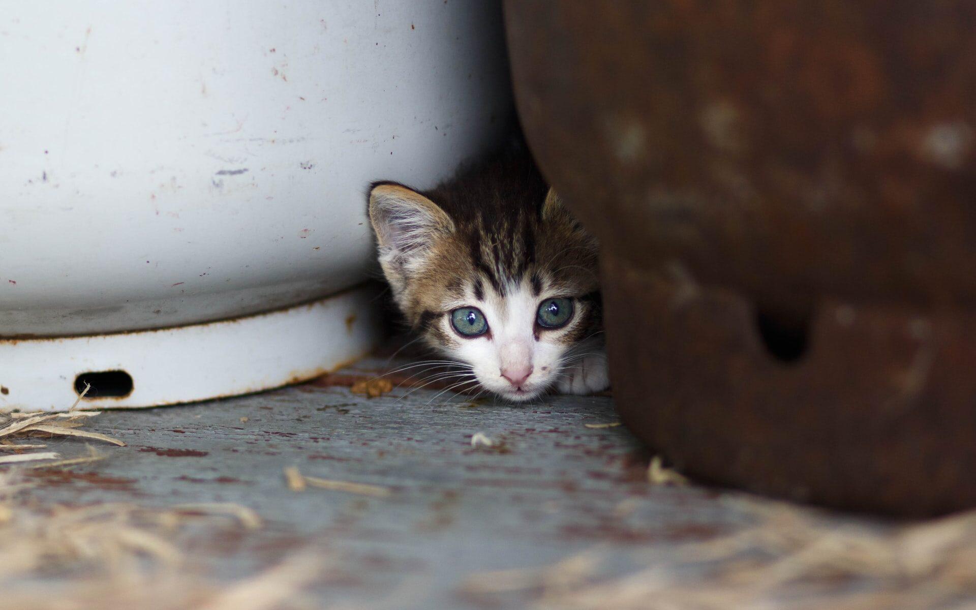 Kissanpentu ulkorakennuksen lattialla