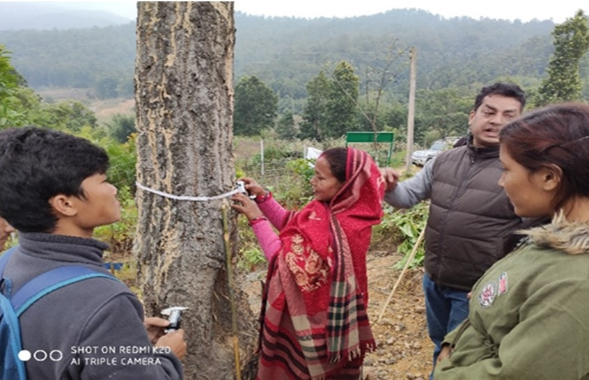 Puun rungon mittaamista Nepalissa
