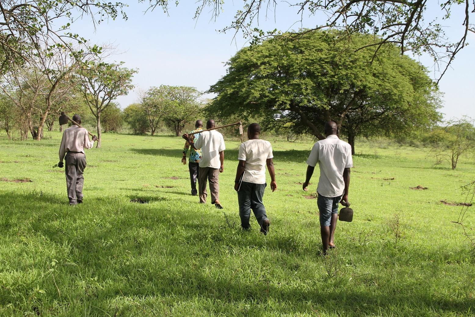 Miesjoukko menossa istuttamaan puita