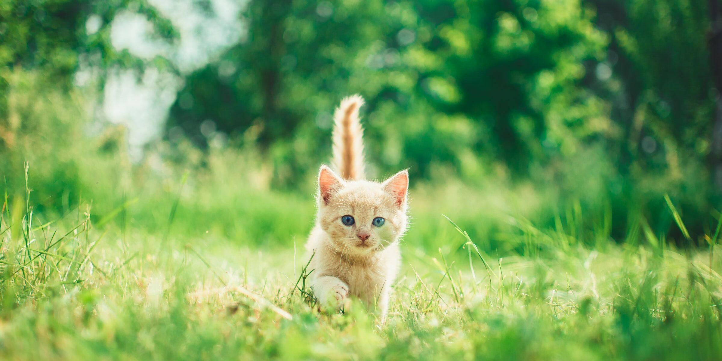 Pieni kissa heinikossa