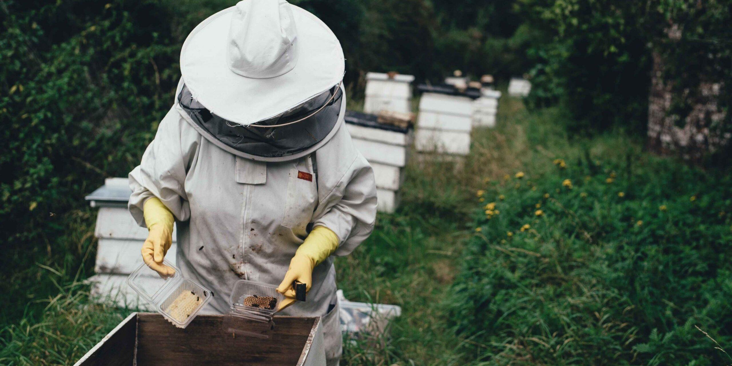 Mehiläishoitaja suoja-asussa mehiläisten pesälaatikon äärellä